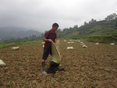Livestock manure is used as ecological fertiliser by the farmers.