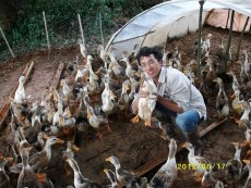 The rural returnee as well as PCD's CSA intern Yao Huifeng commits himself to ecological agriculture in which he raises ducks in his paddy field.