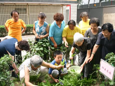 Harvesting time, sharing time. Some of the harvests are shared with 'home-alone' elderly residents.