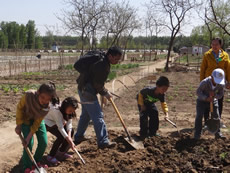 PCD supports the education activities of urban farming in Beijing where children and adults are ploughing in the farm in spring.